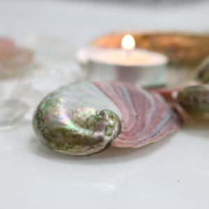 Mini Abalone